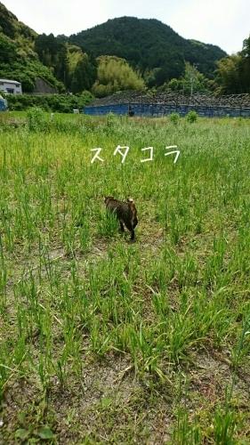 b0187620_20100741.jpg