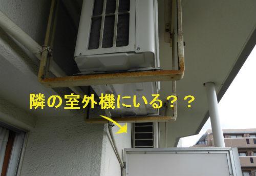 d0039443_13355545.jpg