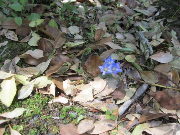 賀茂神社の古墳・うきはの春_a0237545_10483628.jpg