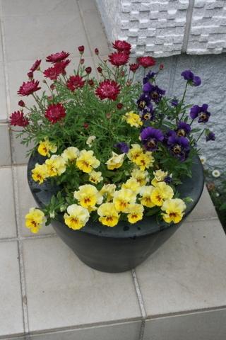 次々と開花しています_c0248269_08085318.jpg