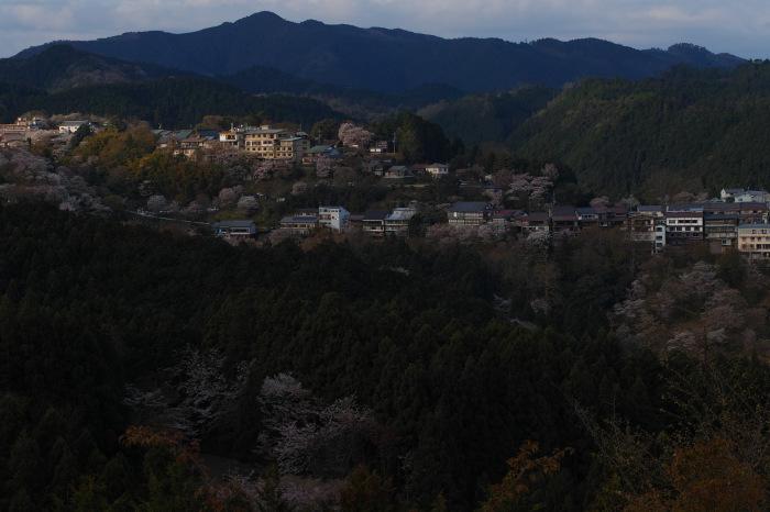 桜  2017  奈良吉野山_f0021869_02583361.jpg