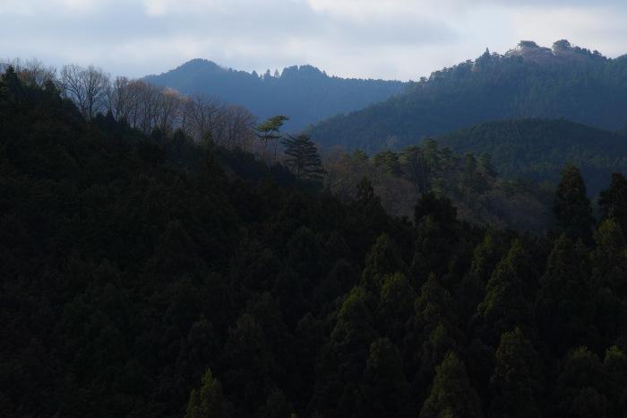 桜  2017  奈良吉野山_f0021869_03040243.jpg