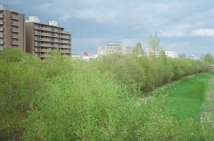 Agfa Optima で撮った白樺の緑と川柳の緑_c0182775_17575622.jpg