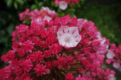 庭の花々♪_f0243509_14193526.jpg