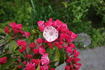 庭の花々♪_f0243509_14193806.jpg