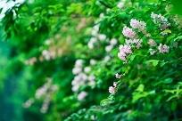 新緑写真&お気に入りのお出掛けスポット!