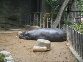 上野動物園_f0153418_1225534.jpg