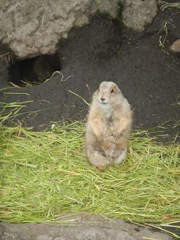 上野動物園_f0153418_1232418.jpg