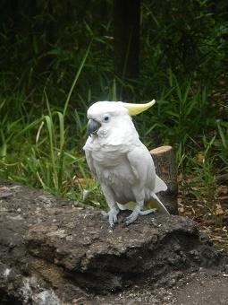 上野動物園_f0153418_1233854.jpg