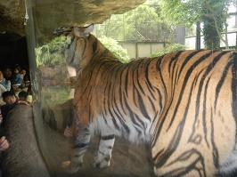 上野動物園_f0153418_1235077.jpg