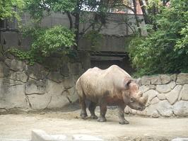上野動物園_f0153418_123863.jpg