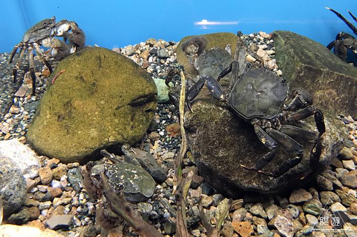 559 宍道湖自然館ゴビウス ~カワヤツメがみれた~_c0211532_12470981.jpg