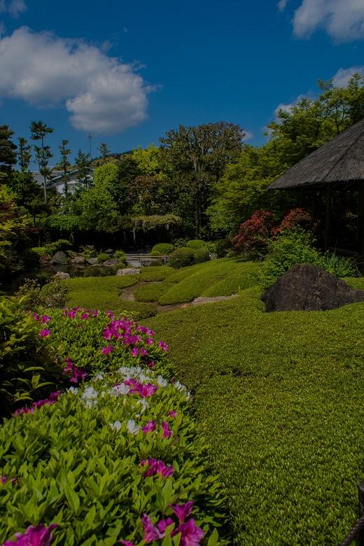 退蔵院の季節の花と青もみじ_e0363038_8361848.jpg