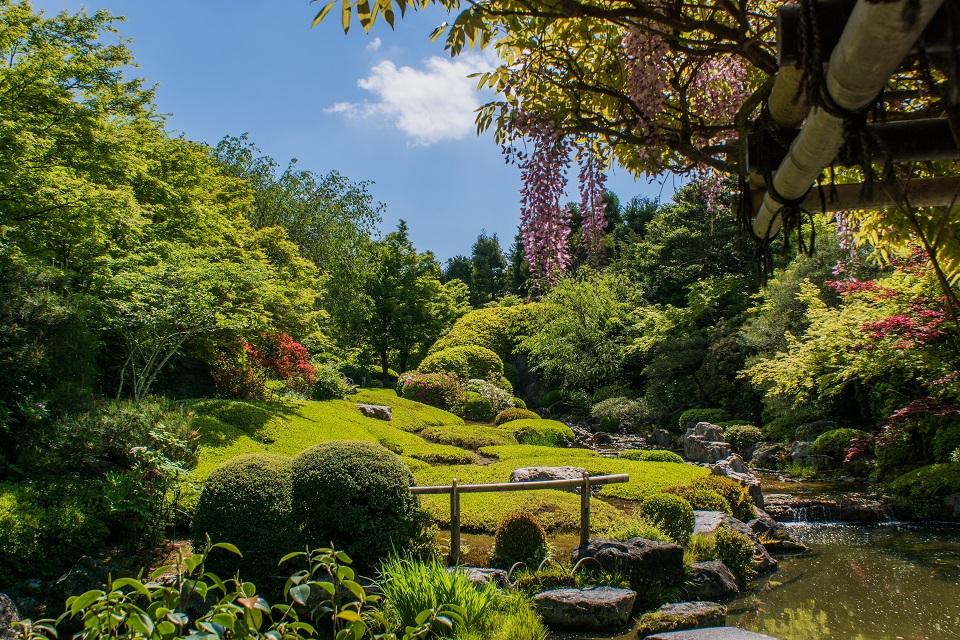 退蔵院の季節の花と青もみじ_e0363038_8362537.jpg