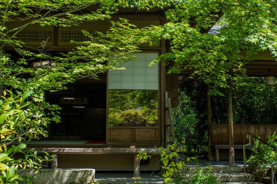退蔵院の季節の花と青もみじ_e0363038_83645100.jpg