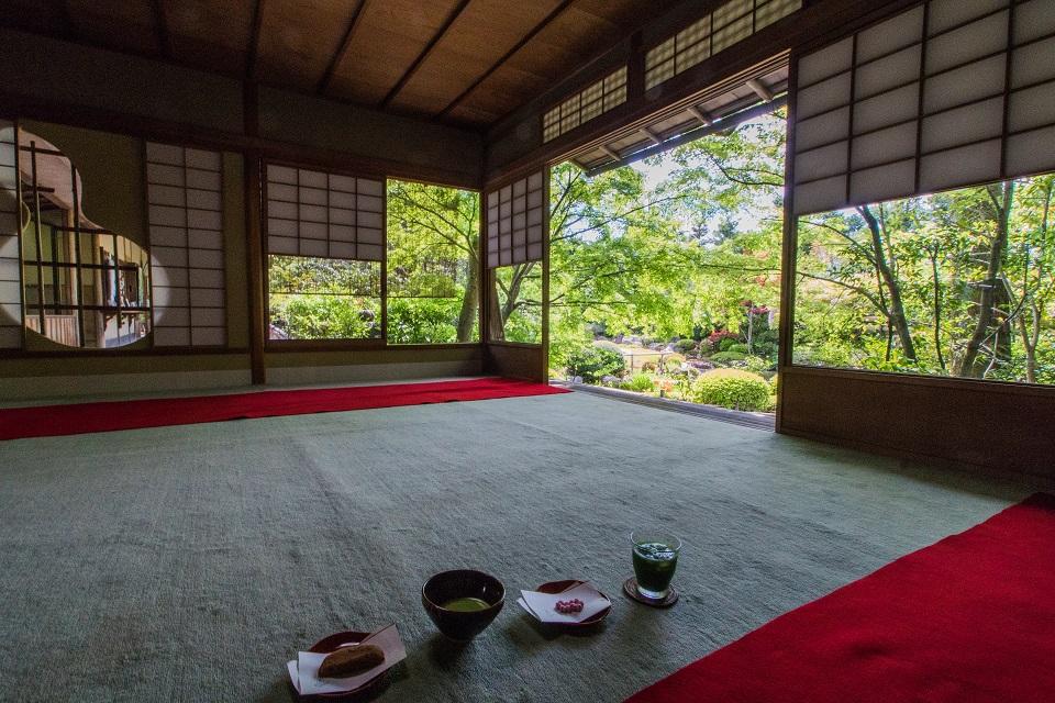 退蔵院の季節の花と青もみじ_e0363038_8365175.jpg