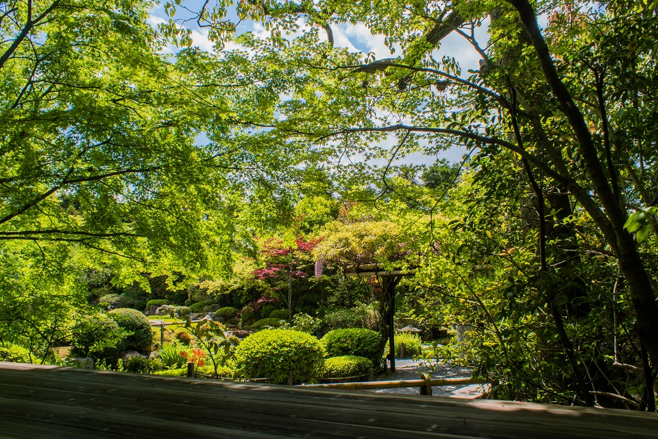 退蔵院の季節の花と青もみじ_e0363038_837762.jpg