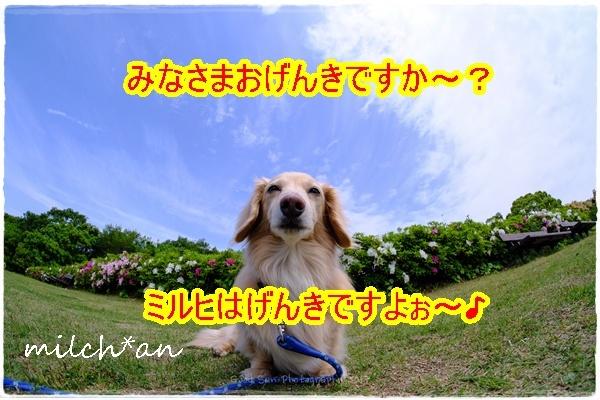 b0115642_22013447.jpg