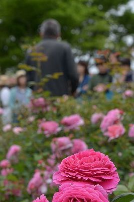 絵美さんが撮した薔薇ツアー・・・2017年5月16日の記録・・_b0137969_05564432.jpg