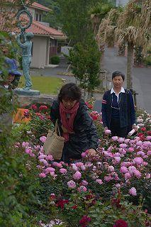 絵美さんが撮した薔薇ツアー・・・2017年5月16日の記録・・_b0137969_06013535.jpg