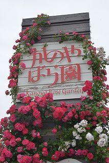 絵美さんが撮した薔薇ツアー・・・2017年5月16日の記録・・_b0137969_06155093.jpg