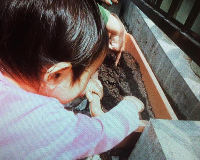 くまクラス  野菜の種を植えました♪_c0293682_18061179.jpg