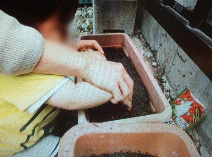 くまクラス  野菜の種を植えました♪_c0293682_18061521.jpg