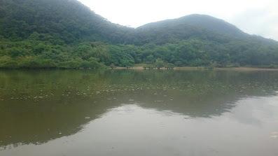 ☆奄美大島 マングローブ☆_d0035397_14342285.jpg