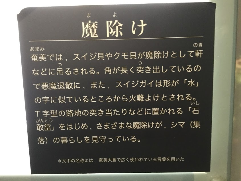 ☆奄美大島 雨の日☆_d0035397_15320036.jpg