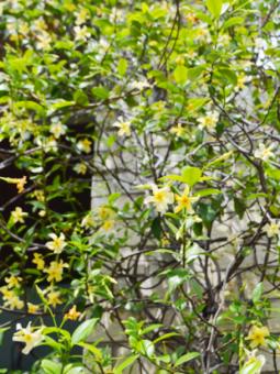 6月の植物ワークショップのご案内_d0263815_18232966.png