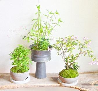 6月の植物ワークショップのご案内_d0263815_18313803.jpg