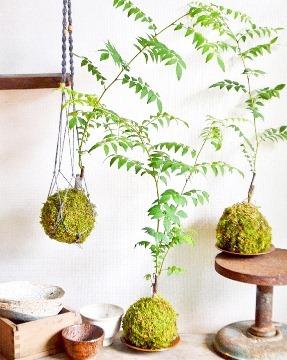 6月の植物ワークショップのご案内_d0263815_18403008.jpg