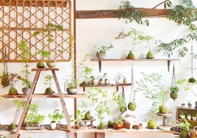 6月の植物ワークショップのご案内_d0263815_18421073.jpg