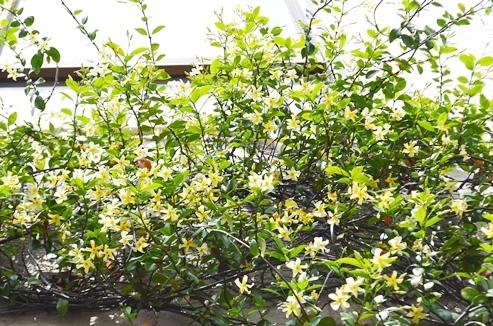 6月の植物ワークショップのご案内_d0263815_18455875.jpg