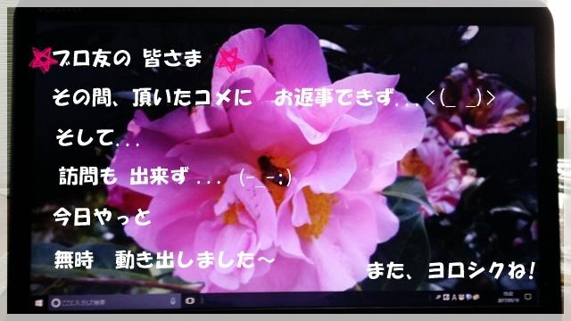 a0115924_16470995.jpg