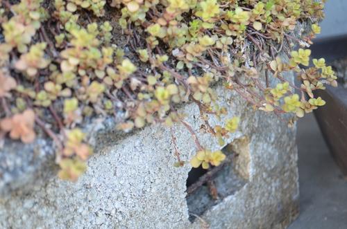 盛岡。雫石。#4_b0207642_1614125.jpg