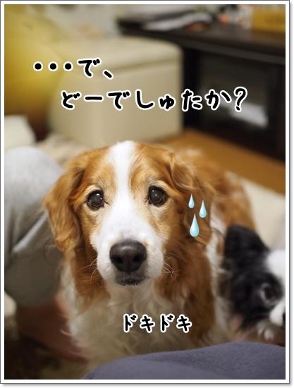 d0013149_00265565.jpg