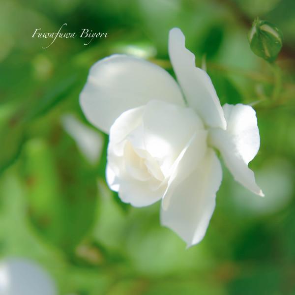 薔薇の季節 **_d0344864_18371589.jpg