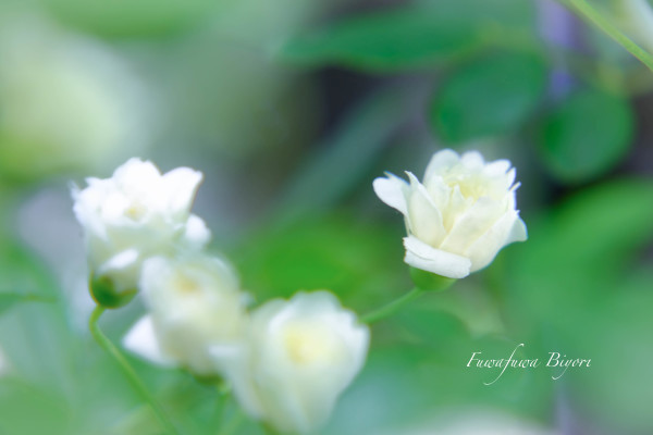 薔薇の季節 **_d0344864_18373860.jpg