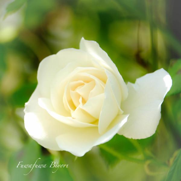 薔薇の季節 **_d0344864_18374910.jpg
