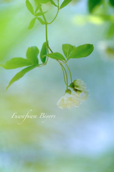 薔薇の季節 **_d0344864_18530115.jpg