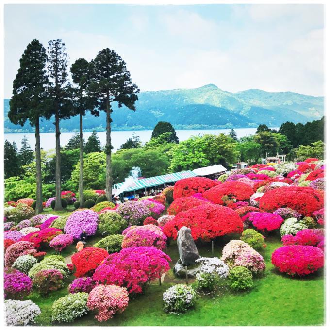 箱根*山のホテルのツツジ_d0110465_07023463.jpg