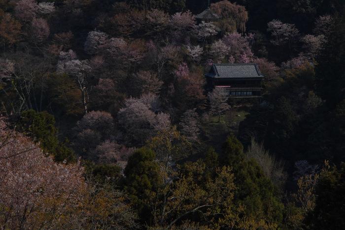 桜  2017  奈良吉野山_f0021869_21522986.jpg