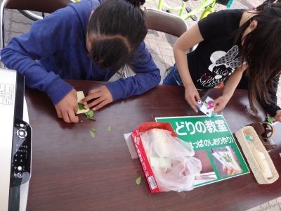 富浜緑地にて、イベント交流広場を開催します!_d0338682_11415363.jpg