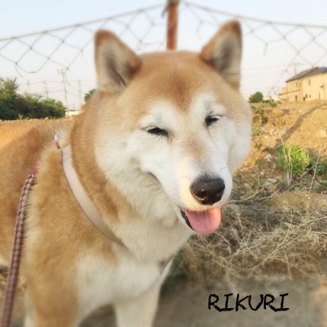 お散歩代行   〜  コロくん 〜_a0284100_20195714.jpg