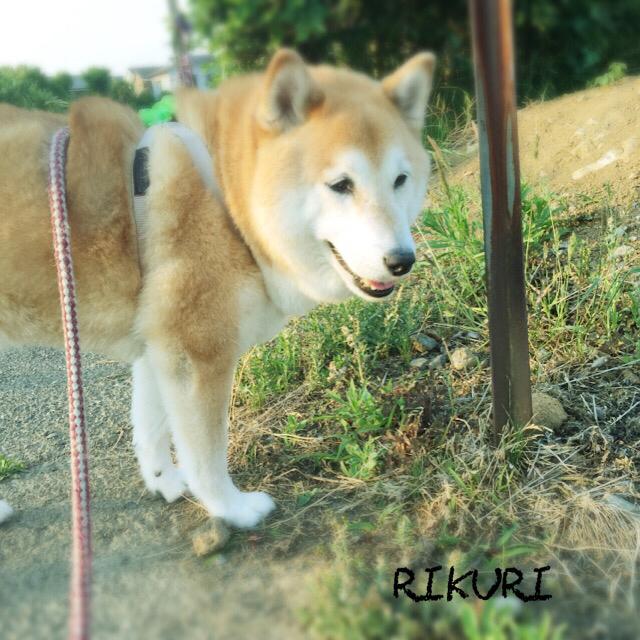 お散歩代行   〜  コロくん 〜_a0284100_20195974.jpg