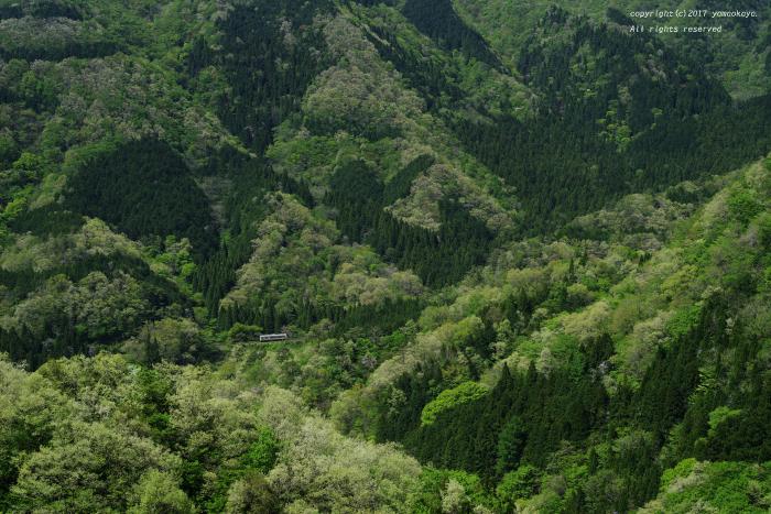 緑萌える山々へと_d0309612_07223841.jpg