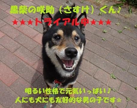 f0121712_12490115.jpg