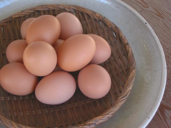「モノカタリ食堂 ②(放し飼い自然卵)」_a0120513_19504532.jpg
