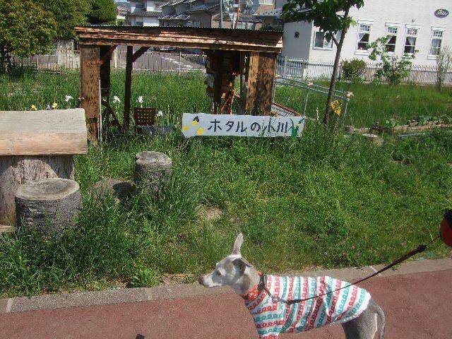f0363538_20092780.jpg